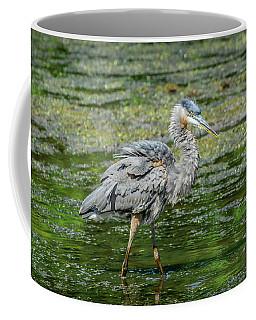 Great Blue Heron In Pond Coffee Mug