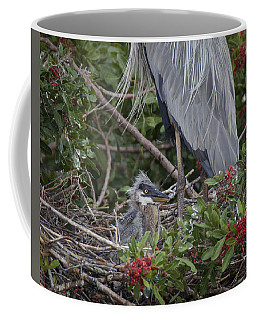 Great Blue Heron Nestling Coffee Mug