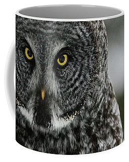 Coffee Mug featuring the photograph Great Grey Owl by Brad Allen Fine Art