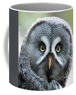 Great Grey Owl Closeup Coffee Mug