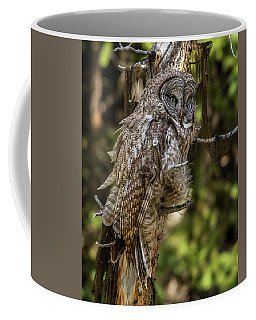 Great Grey Owl In Windy Spring Coffee Mug by Yeates Photography