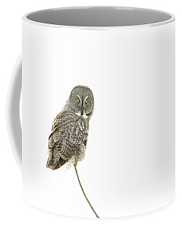 Coffee Mug featuring the photograph Great Grey Owl On White by Mircea Costina Photography