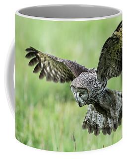 Great Grey's Focused Gaze Coffee Mug