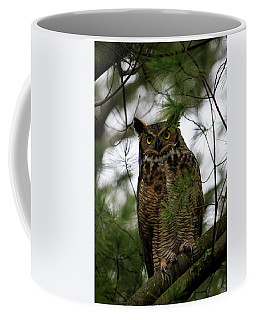 Coffee Mug featuring the photograph Great Horned Owl 2 by Gary Hall