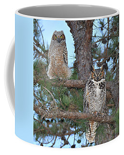 Great Horned Owl And Juvenile  Coffee Mug by Alan Lenk