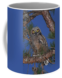 Great Horned Owl Juvenile  Coffee Mug