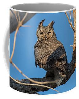 Great Horned Owl Stare Coffee Mug