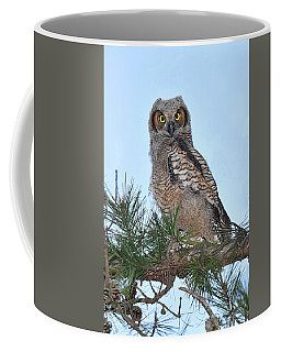 Great Horned Owl Youngster Coffee Mug