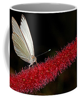 Coffee Mug featuring the photograph Great Southern White by Judy Vincent