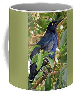 Great-tailed Grackle Coffee Mug