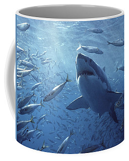 Great White Shark Carcharodon Coffee Mug