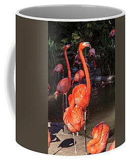 Coffee Mug featuring the photograph Greater Flamingo by Daniel Hebard