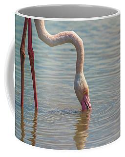 Greater Flamingo In Parc De Camargue, France Coffee Mug