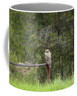 Greathornedowl2 Coffee Mug