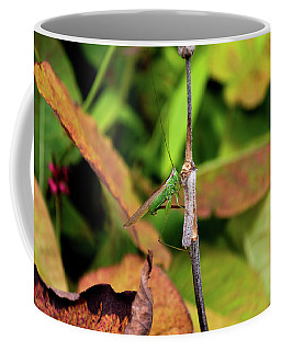 Coffee Mug featuring the photograph Green Conehead Cricket Holding Twig by Scott Lyons
