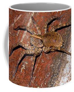 Green Eyed Wolf Spider Coffee Mug