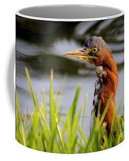 Green Heron Closeup  Coffee Mug