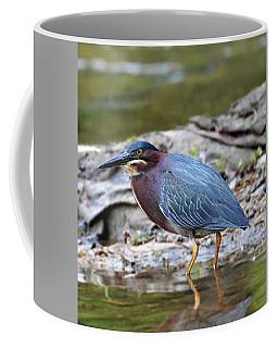 Green Heron Coffee Mug by Kathy Kelly