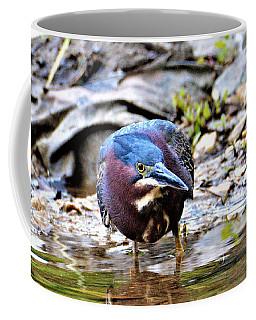 Green Heron Male Coffee Mug by Kathy Kelly