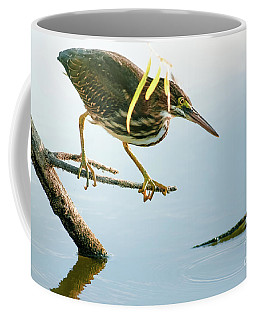 Coffee Mug featuring the photograph Green Heron Sees Minnow by Robert Frederick