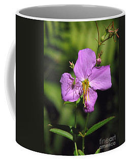 Green Lynx Spider On Meadow Beauty Coffee Mug
