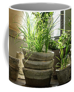 Green Plants In Old Clay Pots Coffee Mug