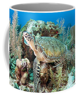 Green Sea Turtle On Caribbean Reef Coffee Mug
