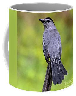 Coffee Mug featuring the photograph Grey Catbird by Debbie Stahre