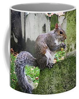 Coffee Mug featuring the photograph Grey Squirrel  by Geoff Smith