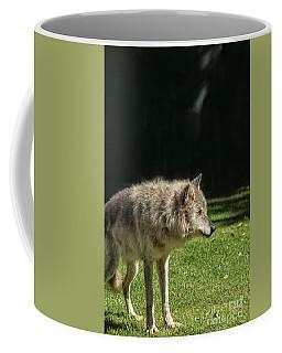 Grey Wolfe In Close Up Coffee Mug by Patricia Hofmeester