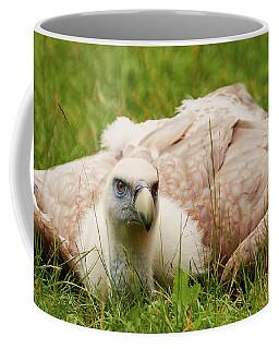 Griffon Vulture Coffee Mug