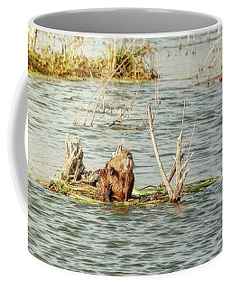 Coffee Mug featuring the photograph Grinning Nutria On Reeds by Robert Frederick