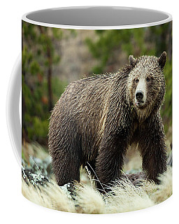 Grizzly Bear Coffee Mug