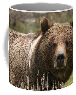 Grizzly Portrait Coffee Mug by Steve Stuller