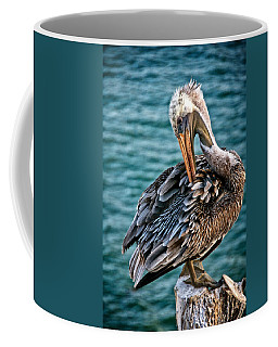 Grooming Session, California Brown Pelican Coffee Mug