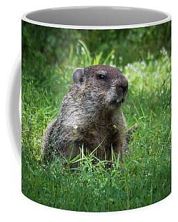 Groundhog Posing  Coffee Mug