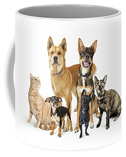 Group Of Cats And Dogs Looking Up On White Coffee Mug