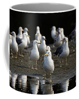 Gulls At The Beach Coffee Mug