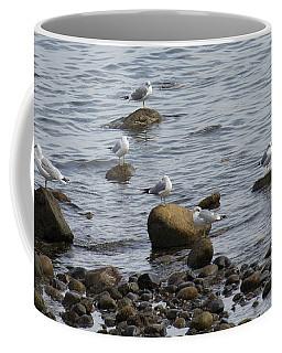 Gulls Resting Coffee Mug