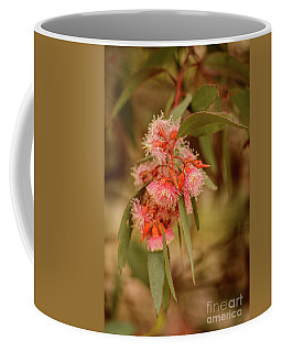 Coffee Mug featuring the photograph Gum Nuts 2 by Werner Padarin