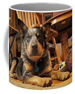 Coffee Mug featuring the photograph Gunner The Blue Heeler by Cricket Hackmann