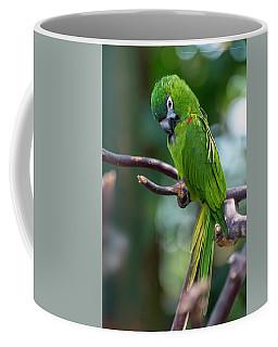 Hahn's Macaws Coffee Mug