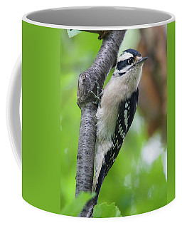 Downy Woodpecker Coffee Mug