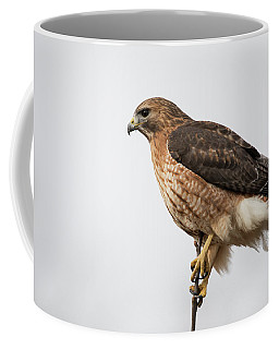 Coffee Mug featuring the photograph Hal The Hybrid Portrait 2 by Brian Hale