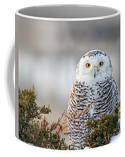 Hampton Beach Nh Snowy Owl Coffee Mug