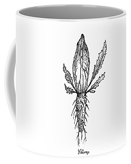 Hand Drawn Of Chicory Isolated On White Background Coffee Mug