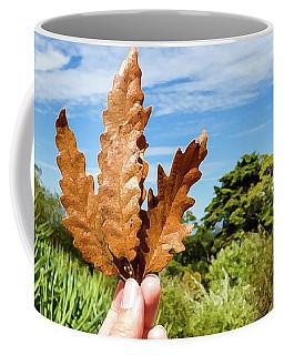 Hand Holding A Beautiful Oak Leaf Coffee Mug