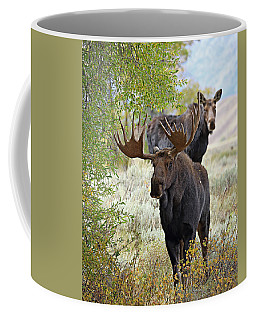 Handsome Bull With Cow Coffee Mug
