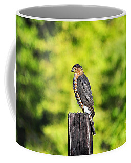 Coffee Mug featuring the photograph Handsome Hawk by Al Powell Photography USA
