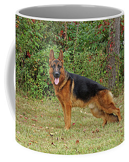 Coffee Mug featuring the photograph Handsome Rocco by Sandy Keeton